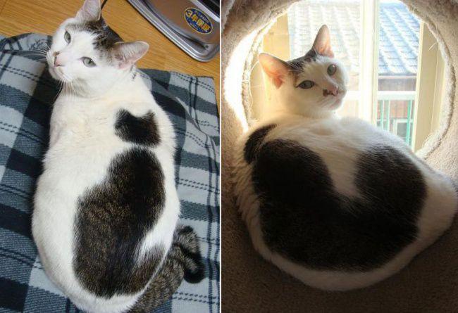 Чумовой природный окрас кошек