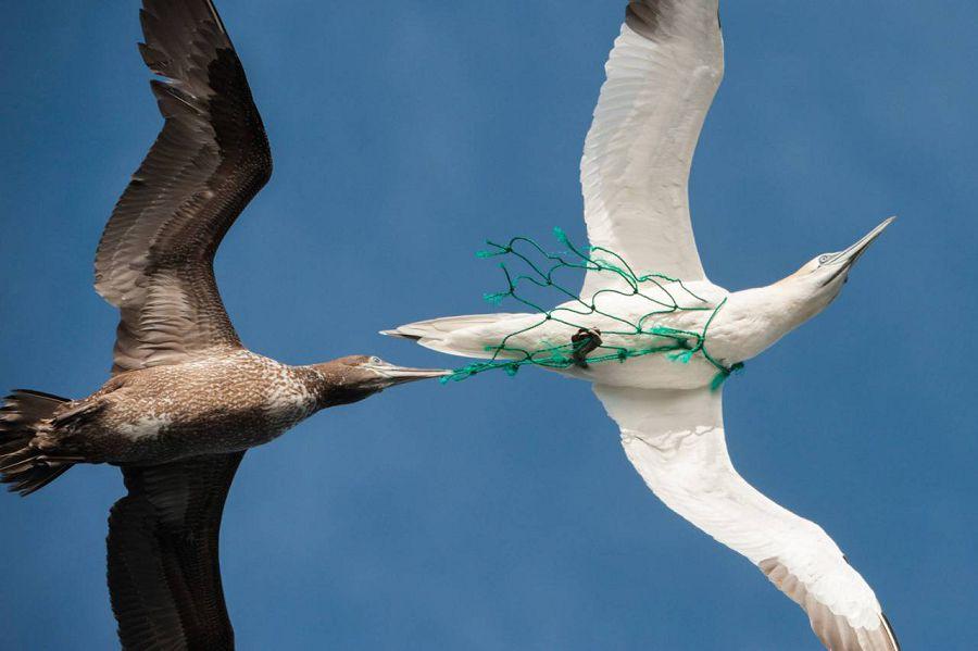 Как животные страдают от пластика