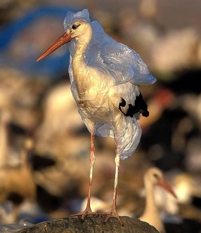 животные, пластик