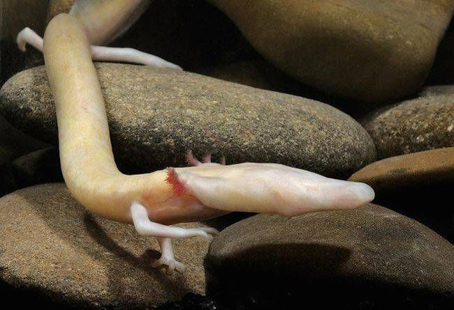 12 удивительных животных на грани исчезновения