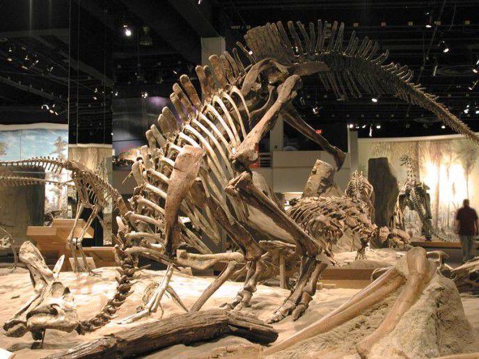 скелет динозавтра