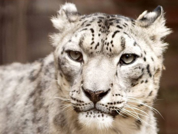 Топ-12 удивительных животных на грани исчезновения