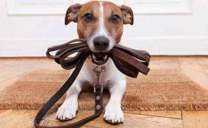 паровоз для собак