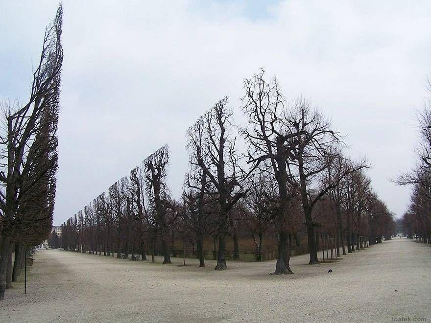 парк Шенбрунн
