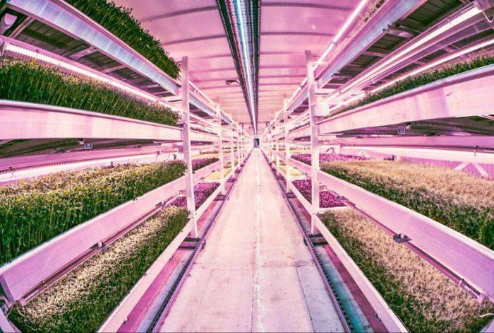 Самая большая гидропонная ферма под землей