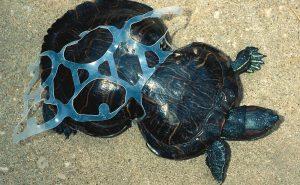 Как животные страдают от пластика. Пора подумать о планете!