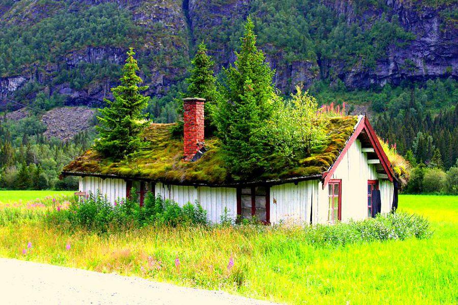 живые крыши