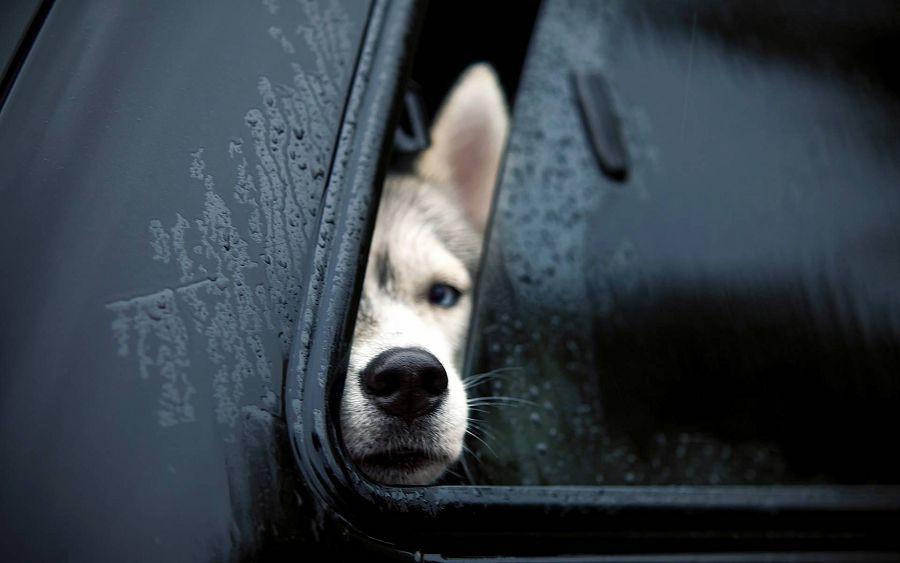 рискуете жизнью собаки