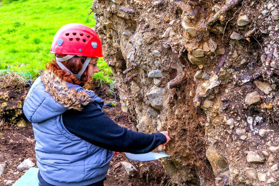 скелет в корне дуба ирландия