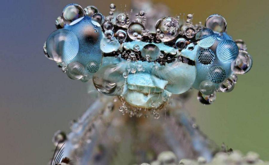 мнасекомые в росе