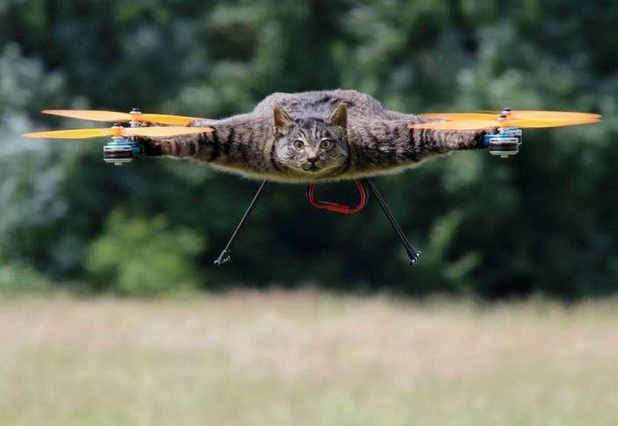 Голландец сделал из своего погибшего кота вертолет