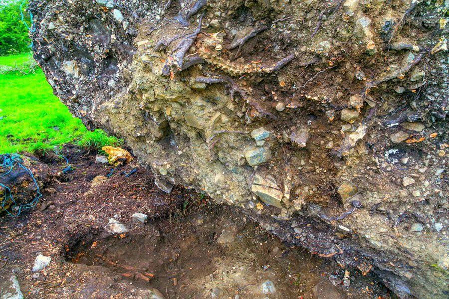 В корнях дуба найден 1000-летний скелет