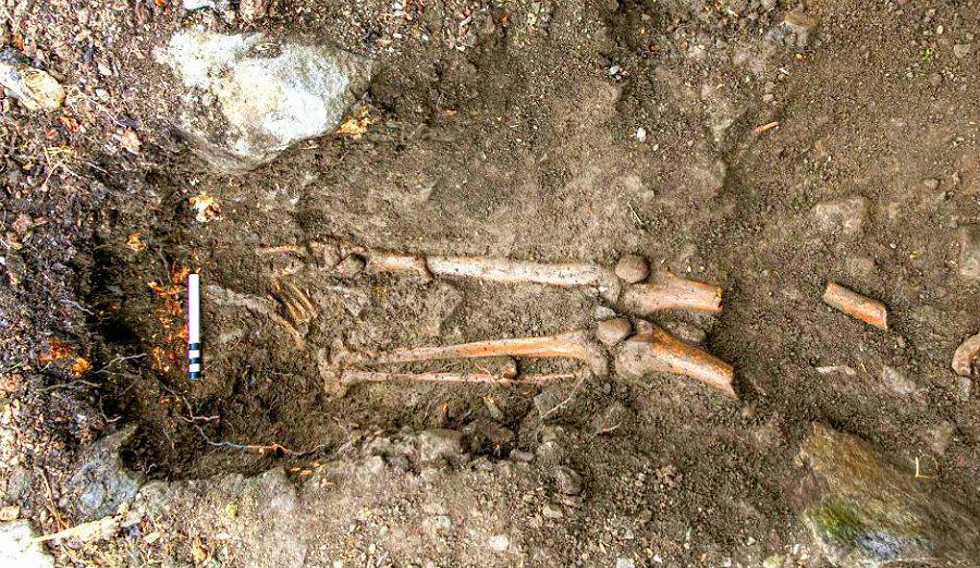 скелет в корне дуба