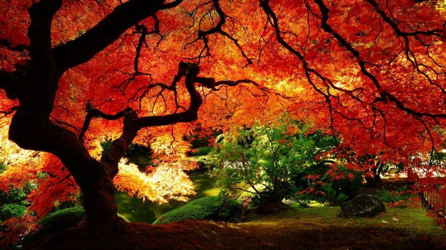 Осенние пейзажи мира 9