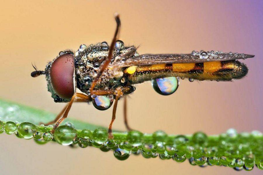 насекомые в росе