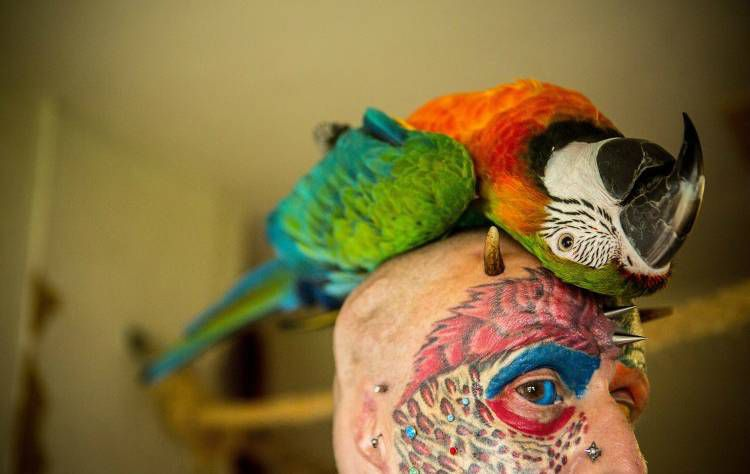 человек-попугай