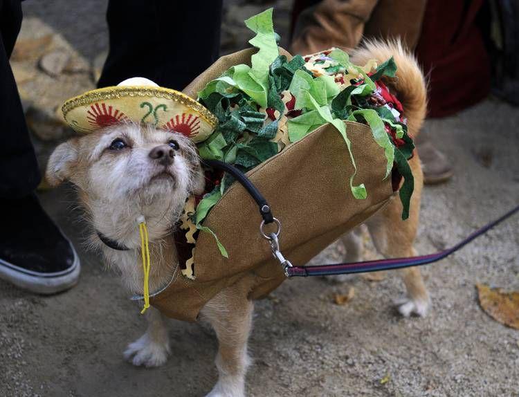 Собаки тоже любят Хэллоуин