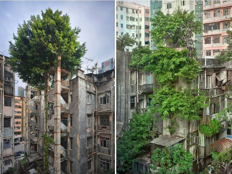 дерево в здании