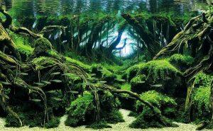 Включи креатив и получи чудо-аквариум
