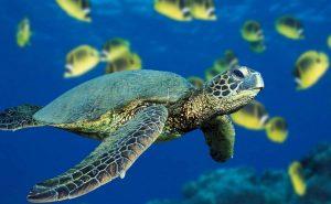 флуоресцентная черепаха