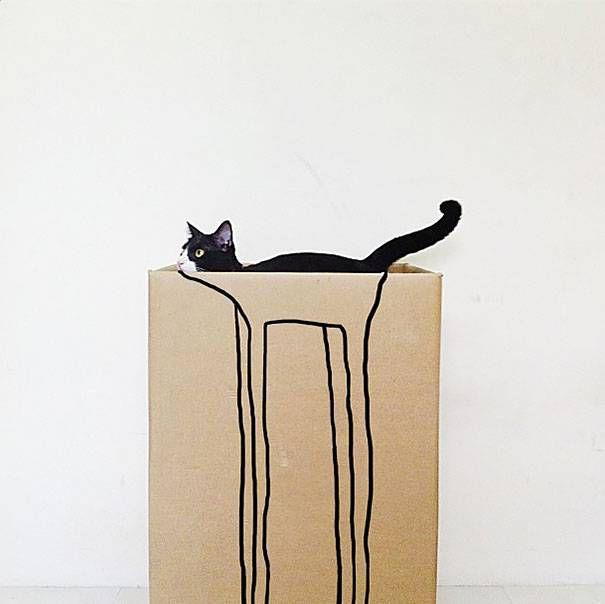 снимки котов