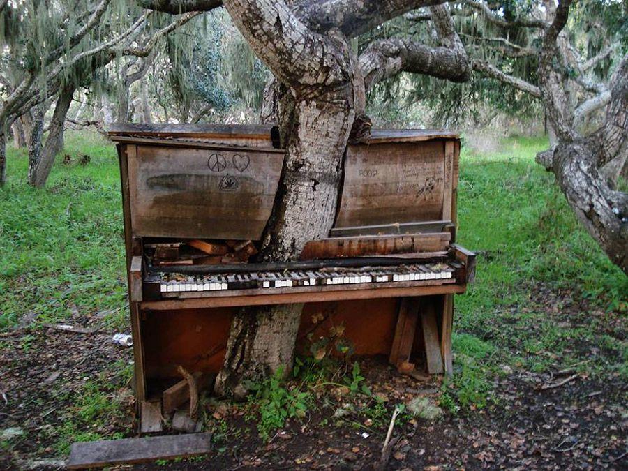 Дерево-пианино