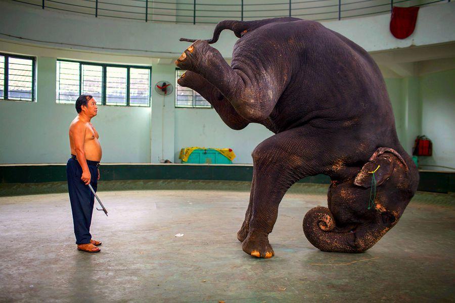 закулисье цирка
