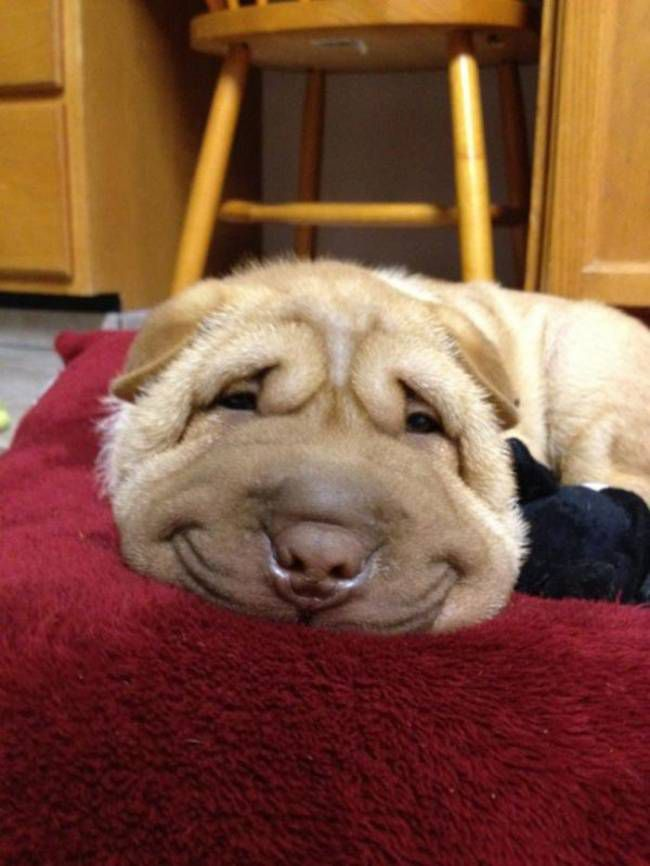 собаки-улыбаки 1