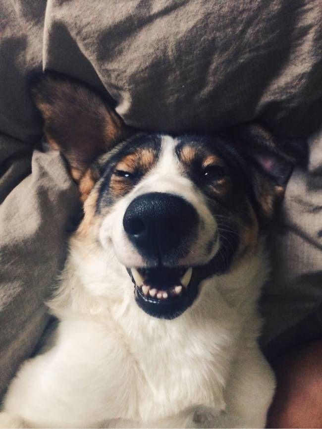 собаки-улыбаки 11