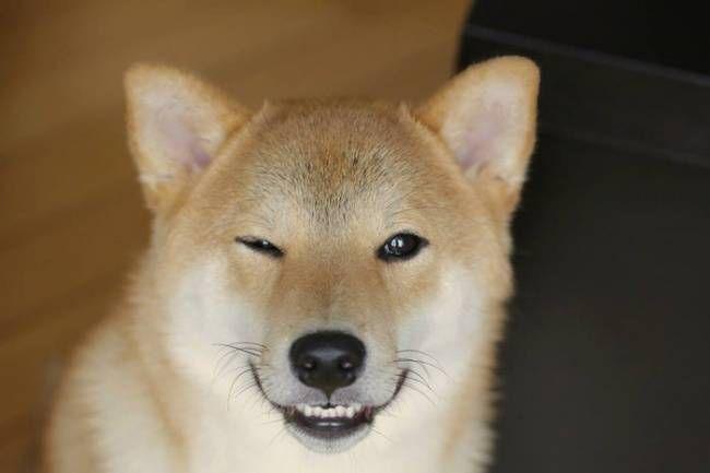 собаки-улыбаки 12
