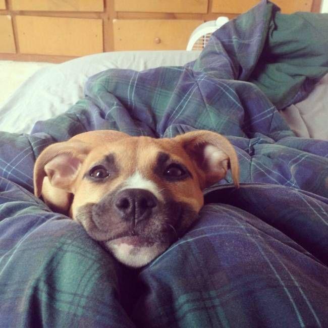 собаки-улыбаки 6