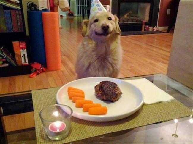 собаки-улыбаки 8