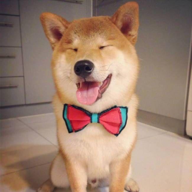 собаки-улыбаки 9