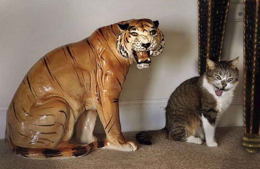 cat door air spray