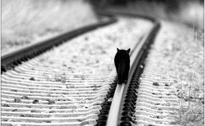 кот на рельсах спасение
