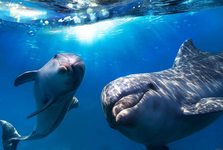 дельфинарий на острове Киш