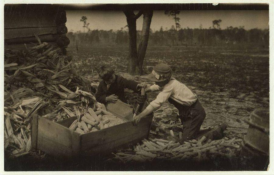 Дети чистят кукурузу в учебное время на одной из ферм Дублина, Джорджия. 1915 год