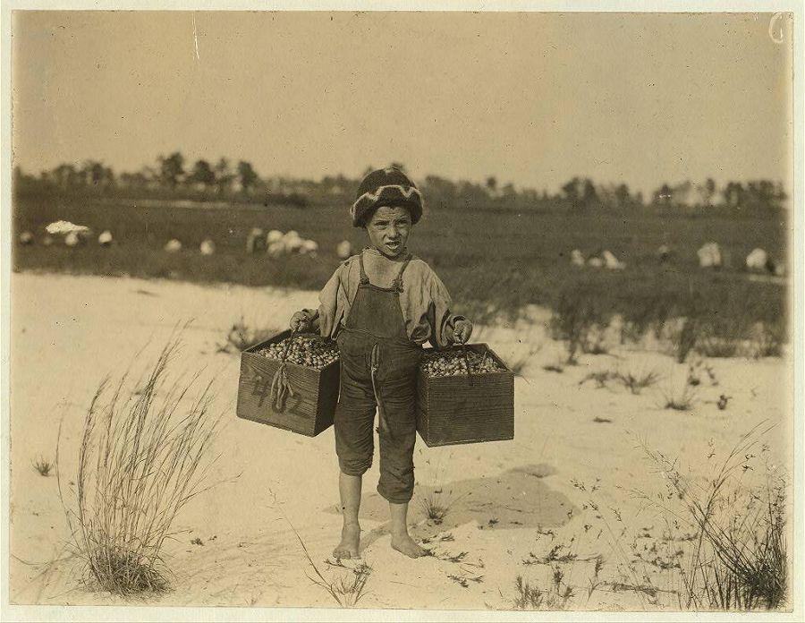 5-летняя Сальвин занимается тем, что собирает клюкву на продажу. Нью-Джерси. 1910 год