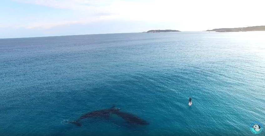 Прогулка с огромными китами 2
