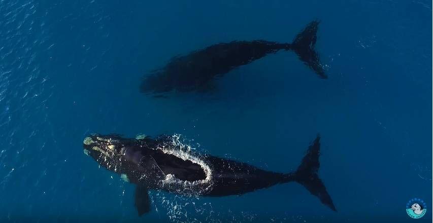 Прогулка с огромными китами 3