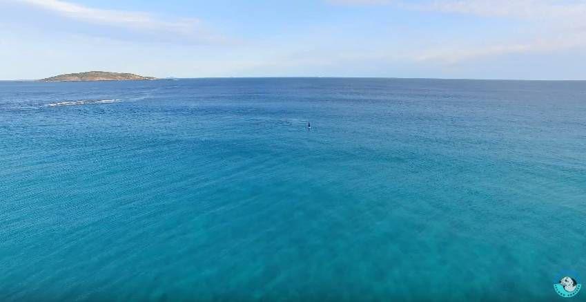 Прогулка с огромными китами