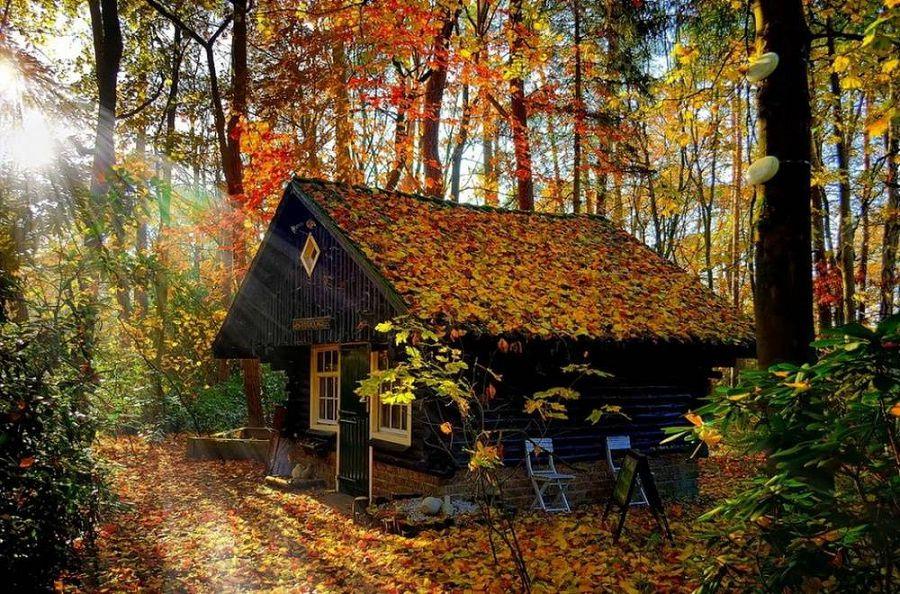 Сказочные дома в гармонии с природой 15