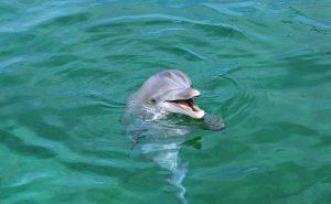 дельфин спасатель
