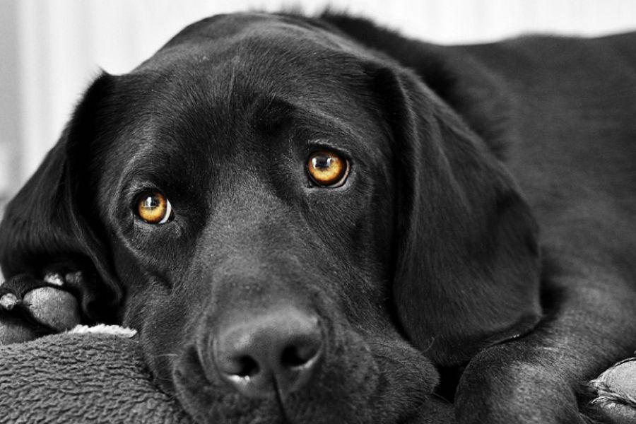 Чудовищные примеры жестокого обращения с животным