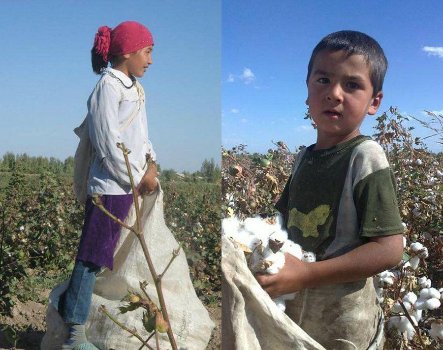 Пятиклассница и мальчик дошкольного возраста на сборе хлопка в Узбекистане
