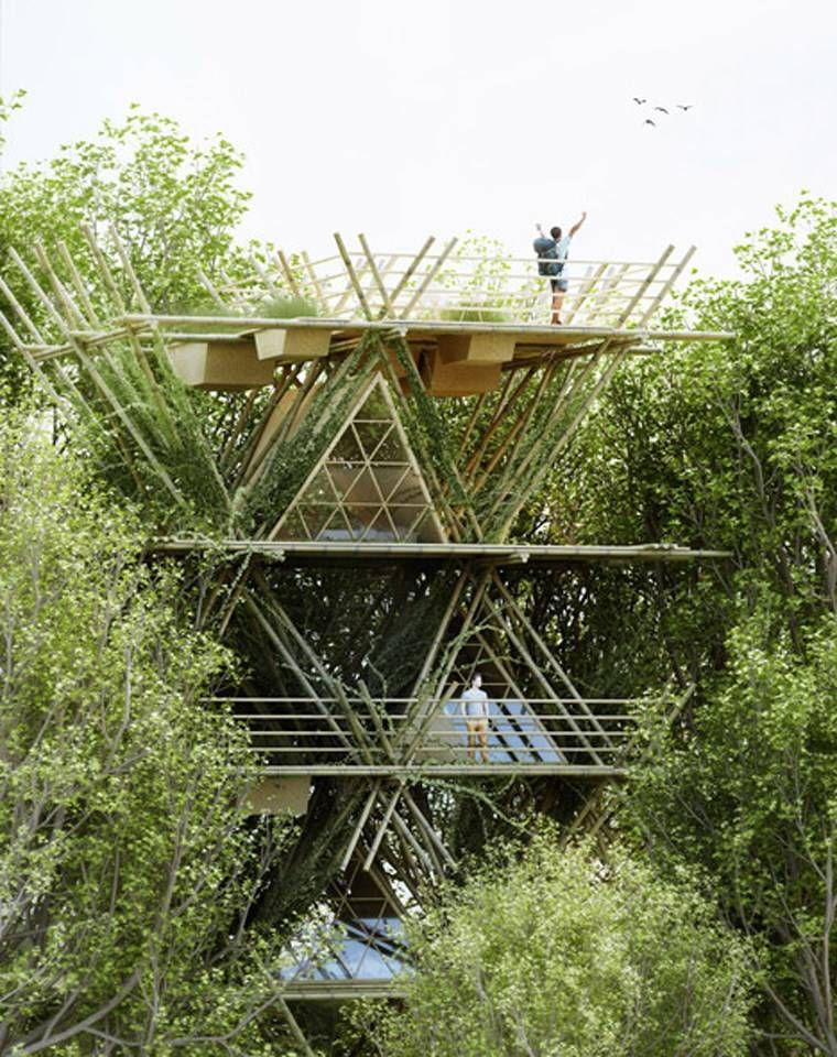 bamboo city
