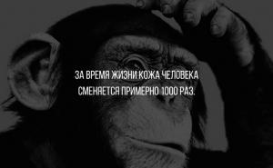 10 mank с фактами о человеческом организме