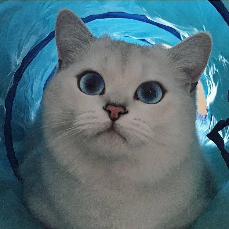 Кот с самыми красивыми в мире глазами