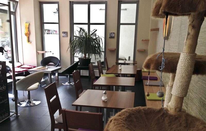 Добро пожаловать в Катцентемпл – котокафе