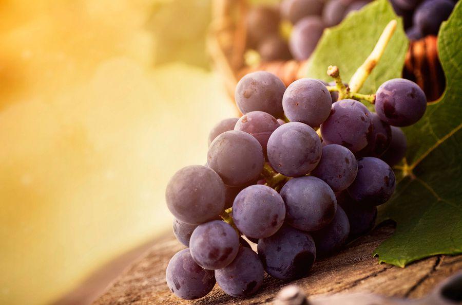 маленькая гроздь винограда